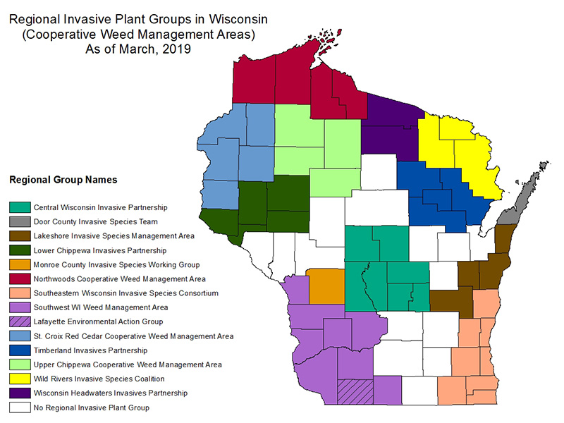 Regional Invasive Plant Groups in Wisconsin